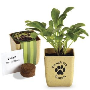 Flower Pot Set w/ Chive Seeds
